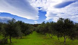 14_olive grove_o_Theophilos Papadopoulos Flickr