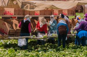 19_migrant_USDA photo by Bob Nichols.
